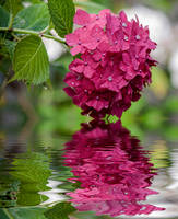 Romantic Flower Art by littleriverqueen