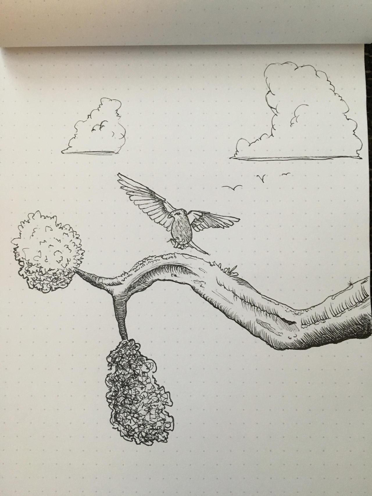 Bird Landing By Yehiel 3 On Deviantart