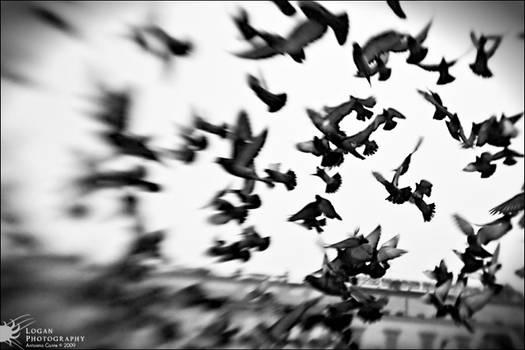 LensBaby: Liberty - Pigeons