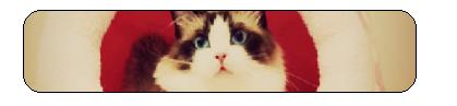 Cat divider by JigglypufftheUTfan