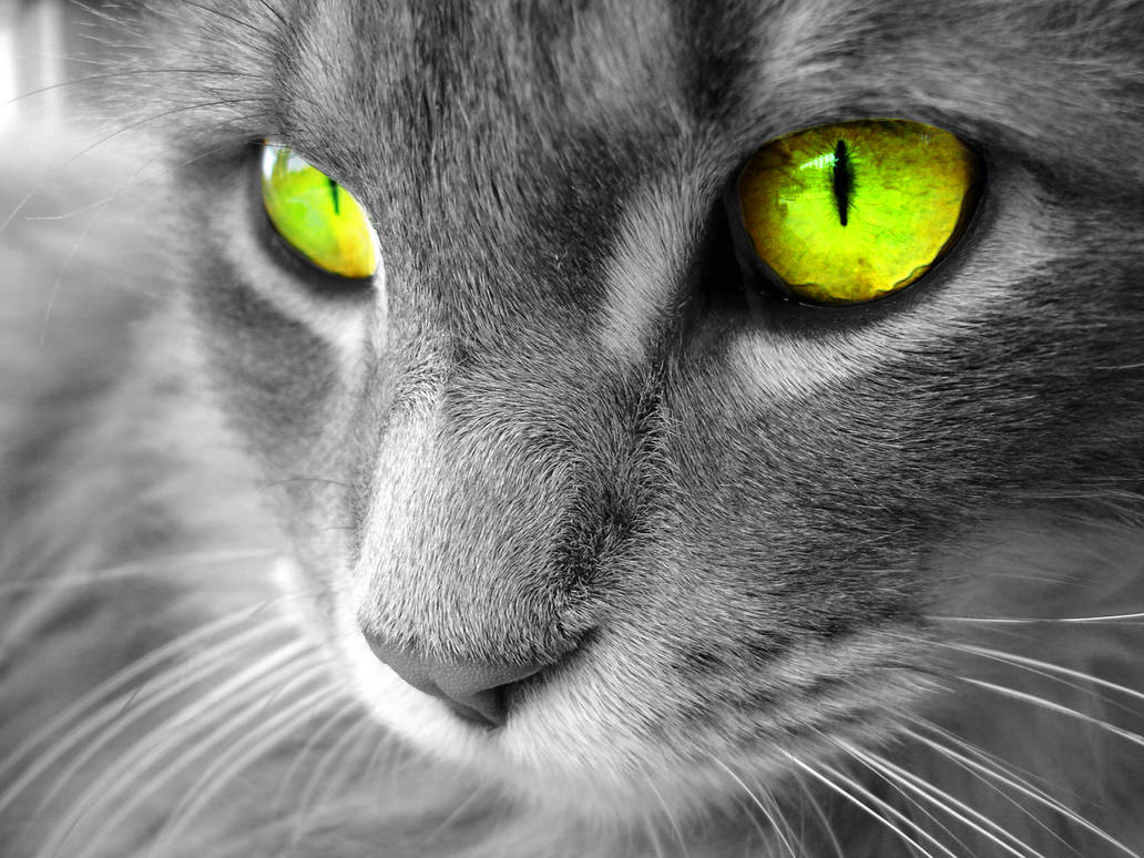 Cat by JaminLemon
