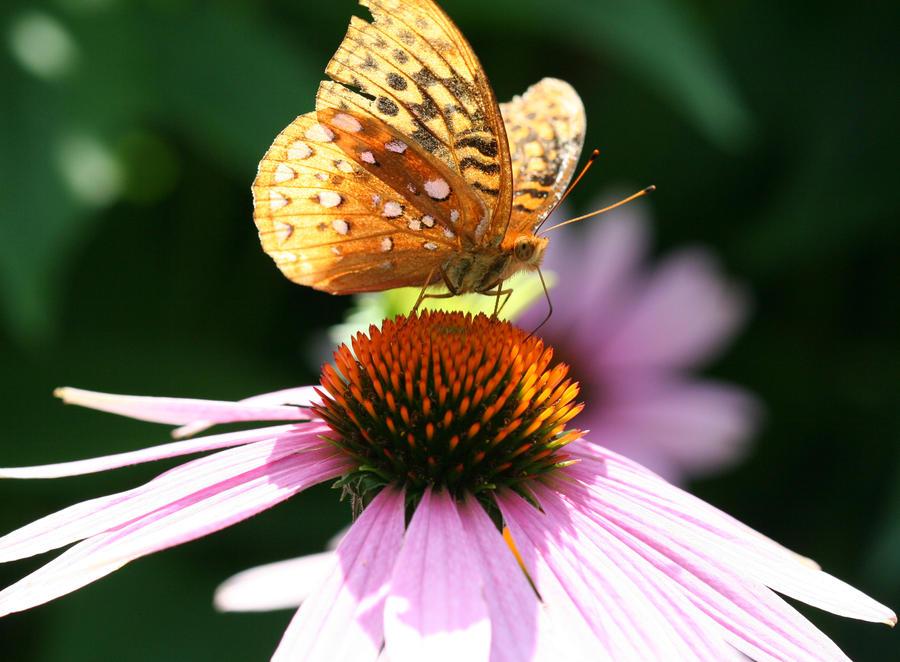 Butterfly by ZachSpradlin