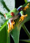 Melting Frog