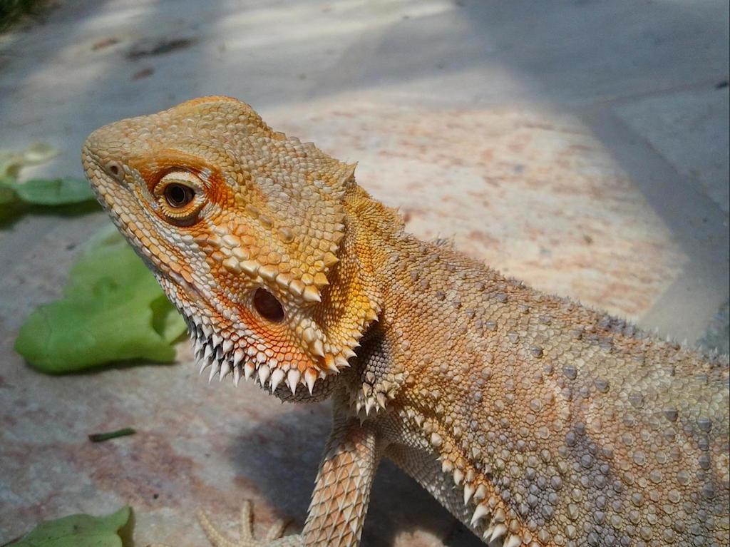 Dragon Born by NutellaMutt