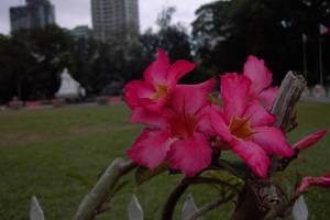 rizal park by uevoliDOG