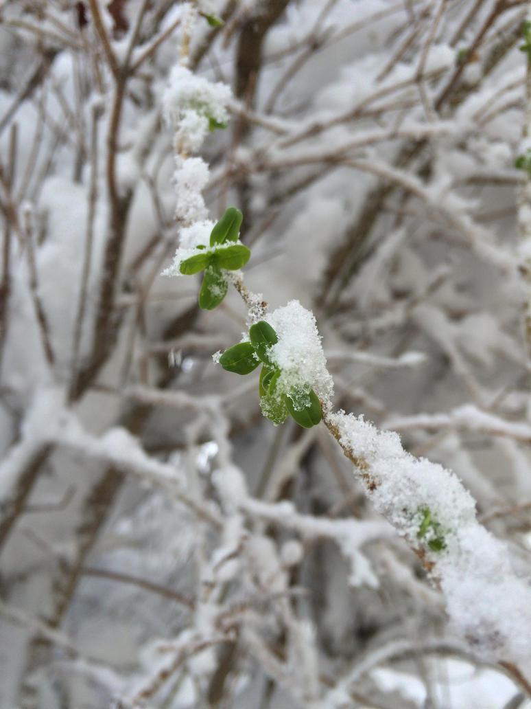 Winter in Spring in Winter by SonazeShadazelover