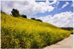 Flowered Hill