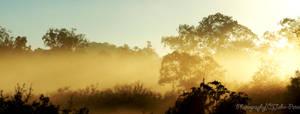 Morning Glow by John-Peter