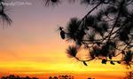 Sunset Skies I