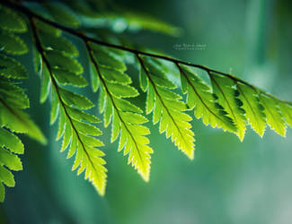Shades of Green by John-Peter