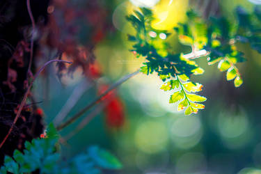 Illuminated Fall by John-Peter