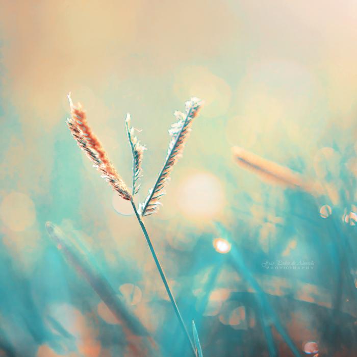 Summer Breeze by John-Peter