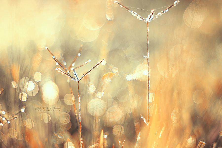 Fairy's Dust by John-Peter
