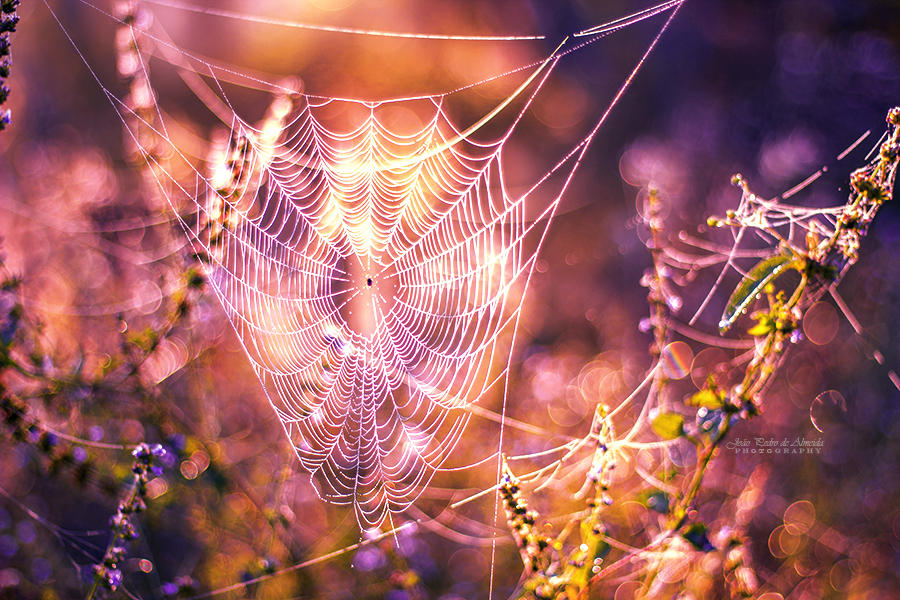 Necklace of Dew by John-Peter