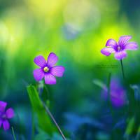 Springtime by John-Peter