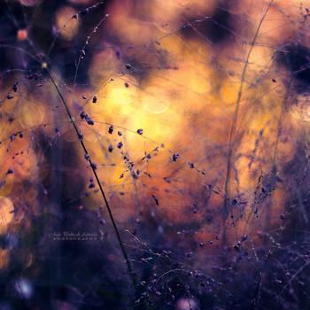 City of Fireflies by John-Peter