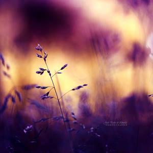 Simple Things by John-Peter
