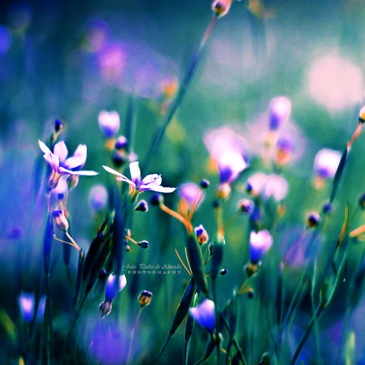 Dance of Flowers by John-Peter