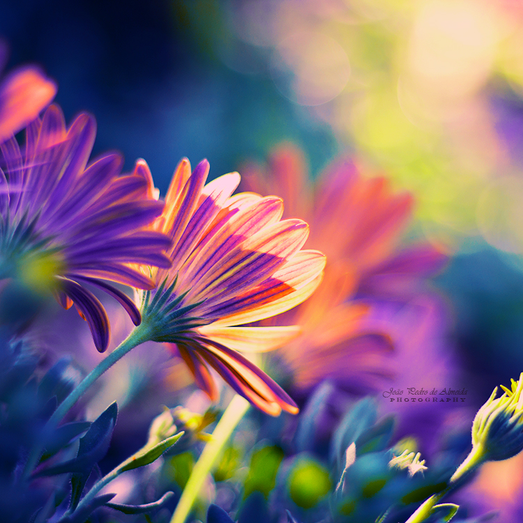 Colorful Days by John-Peter