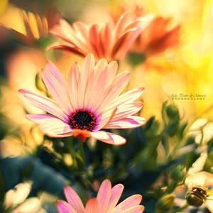 A Piece of Summer by John-Peter