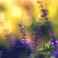 Stillness by John-Peter
