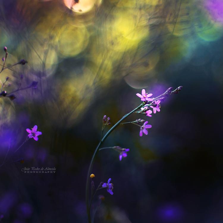 Springtime Mystery by John-Peter