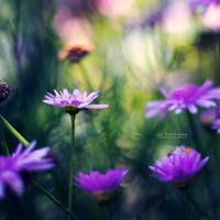 Gentle by John-Peter
