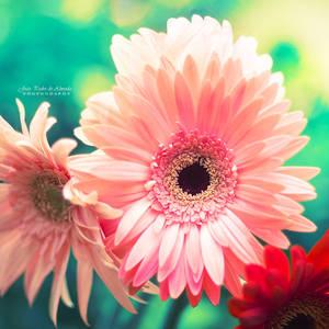 Sunny Love I by John-Peter