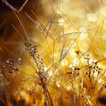 When the Sun Flies by John-Peter