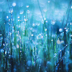 Crystals of Life by John-Peter