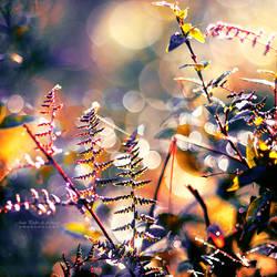 Primordial Autumn by John-Peter