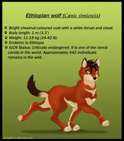 Ethiopian wolf by Honeykitten