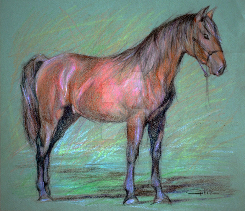 Iberian Horse Breed Color Pencil Drawing By Petartportraits On Deviantart