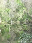 Swamp Stock 2 original