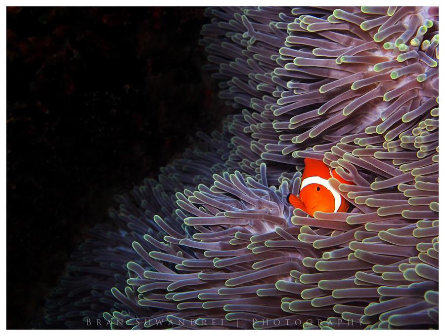 Nemo by bransuwandrei
