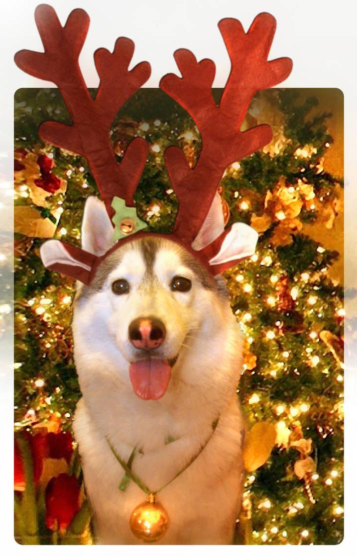 SUKI Navidad2 by SicilianValkyrie