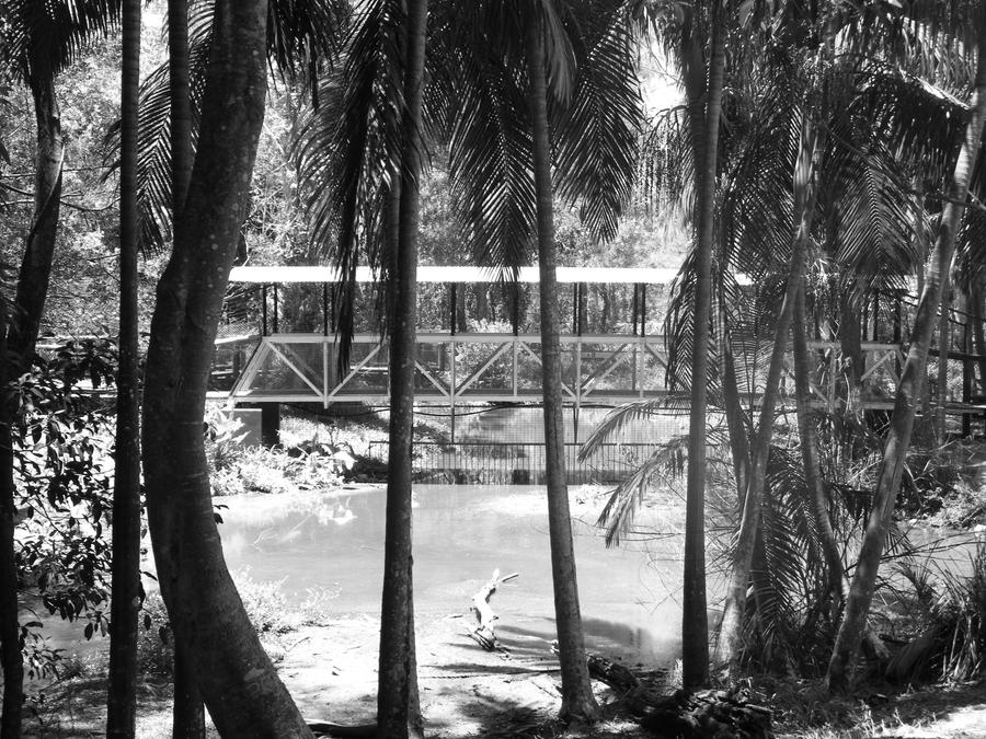 Walkway and Palms by alanhay