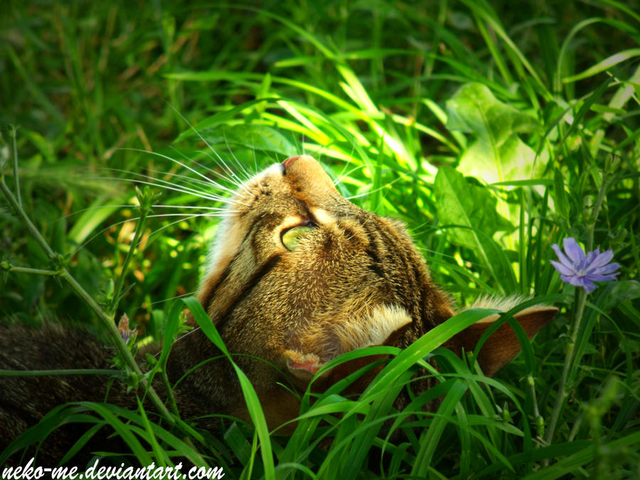 Cat122 - Shine by Neko-me