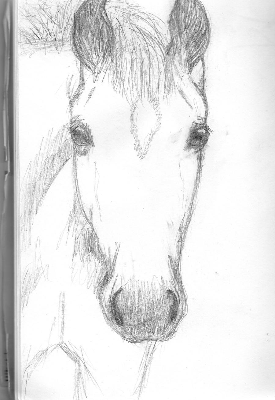 How To Draw Realistic Horse Face