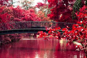Bridge Red Vision by RedRavenPics
