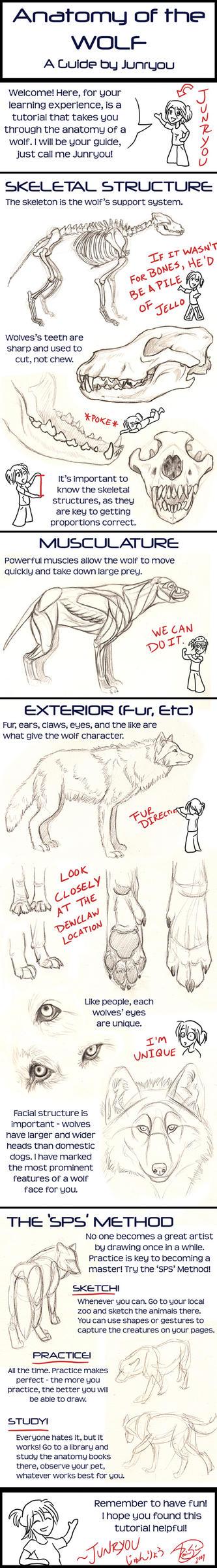 Anatomy of a Wolf - A Tutorial by rosiesinner on DeviantArt