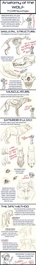 Anatomy of a Wolf - A Tutorial