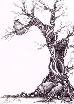 'Meet me by the twisty tree'