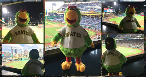 The Pirate Parrot Visits PNC Park