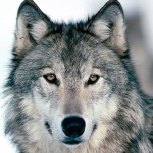 silverwolf - DeviantArt