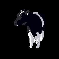 Cow by eran0004