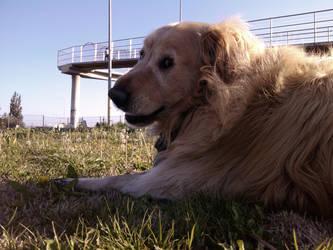 Sonny, my dog by carloshorment