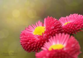 Flowers by jeroenpaint