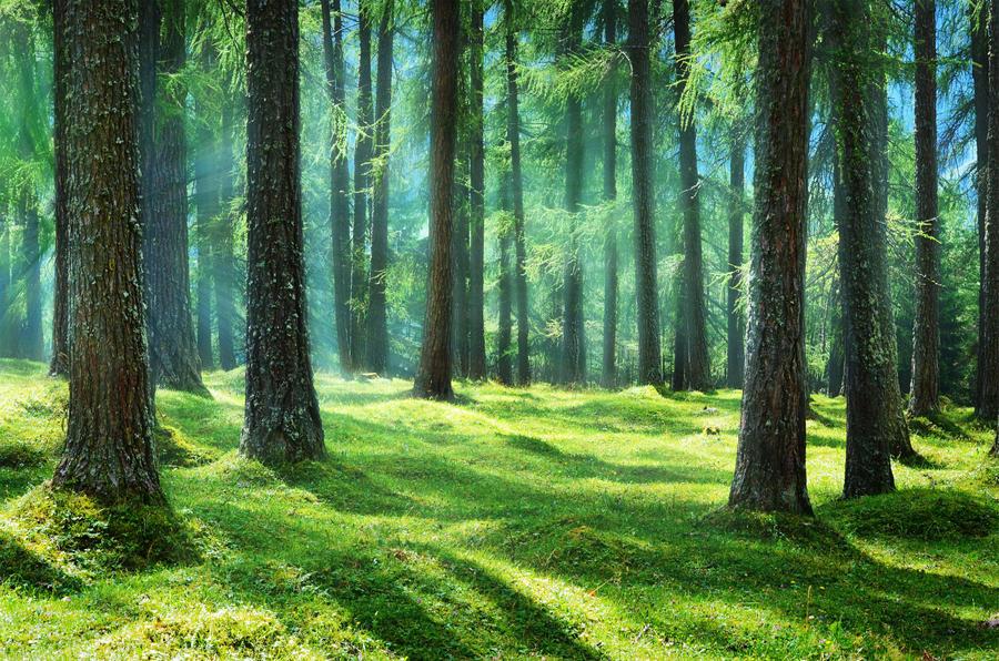 fantasy forest by jeroenpaint on deviantart