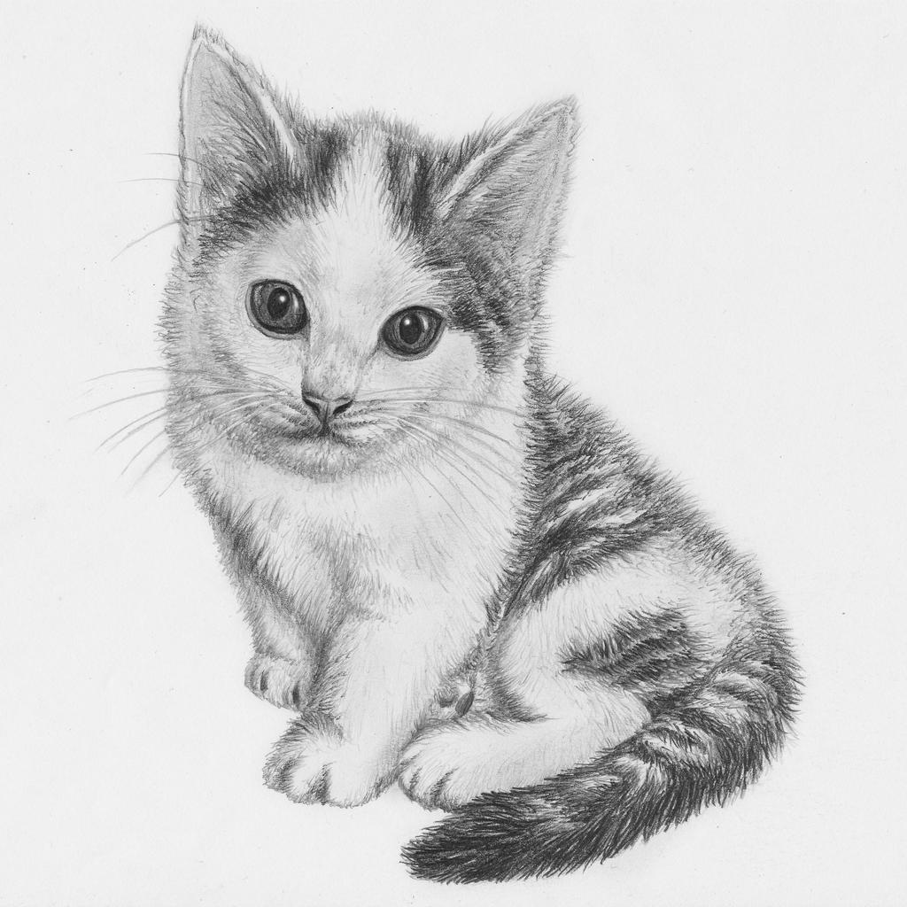 Kitten drawing by jeroenpaint on DeviantArt